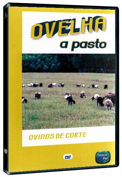 Livro - Ovelha a Pasto - Ovinos de Corte