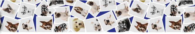 Fitas  - Fotos Cães nº5