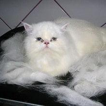 MagicFUR Pequeno - Cães/Gatos