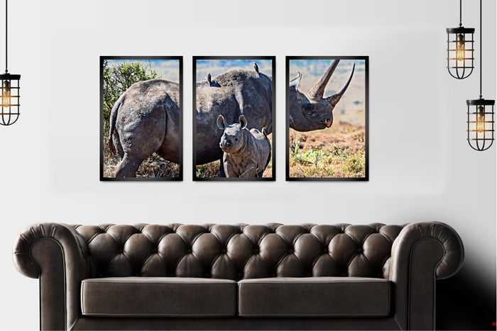 Kit 3 Quadros Rinoceronte