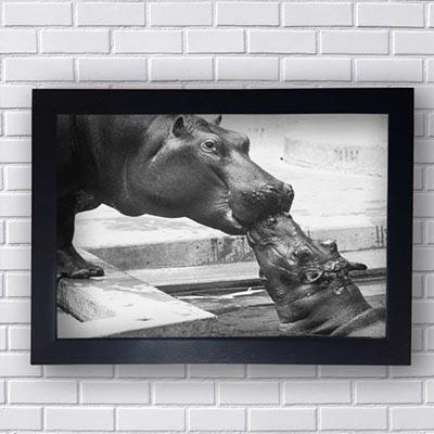 Quadro Decorativo de Hipopótamo