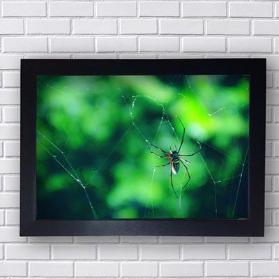 Quadro Decorativo de Aranha