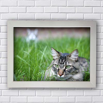 Quadro Decorativo de gato