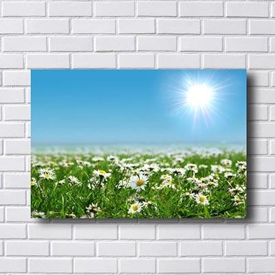 Quadro Campo de Flores Branca