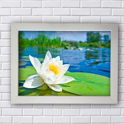 Quadro Flor Branca