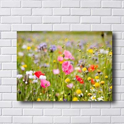 Quadro Flor Campo de Flores
