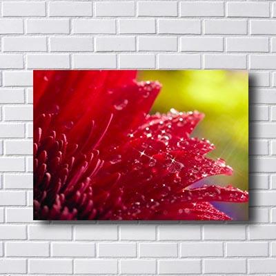 Quadro Flores Vermelha