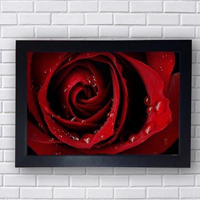 Quadro Rosa Vermelha