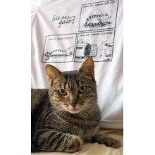 Filé de Gato | Camiseta Estados de Gato