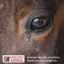 Doe para a ONG Princípio Animal