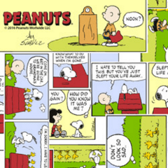 Tricoline Personagens Snoopy SN013C01 TECIDO TRICOLINE ESTAMPADO