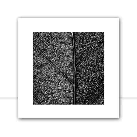 Plants Q II por Joel Santos